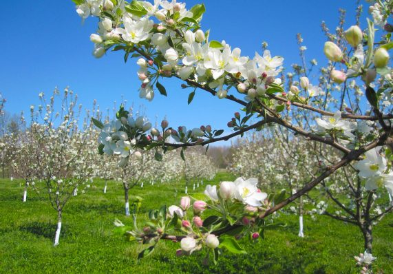 crab-trees-kordick-family-farm-mount-airy-pilot-mountain-north-carolina-apples-cider-syrup-baba-yaga