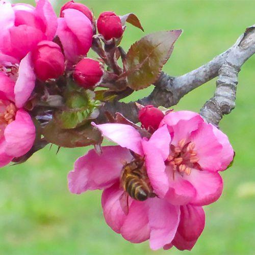 baba-yaga-redfield-blossom-kordick-family-farm-mount-airy-pilot-mountain-north-carolina-apples-cider-syrup-baba-yaga