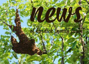 honeybee swarm apple tree