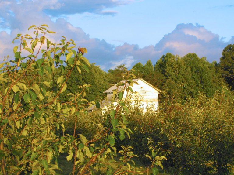 baba-yaga-angle-pack-house-kordick-family-farm-mount-airy-pilot-mountain-north-carolina-apples-cider-syrup-baba-yaga