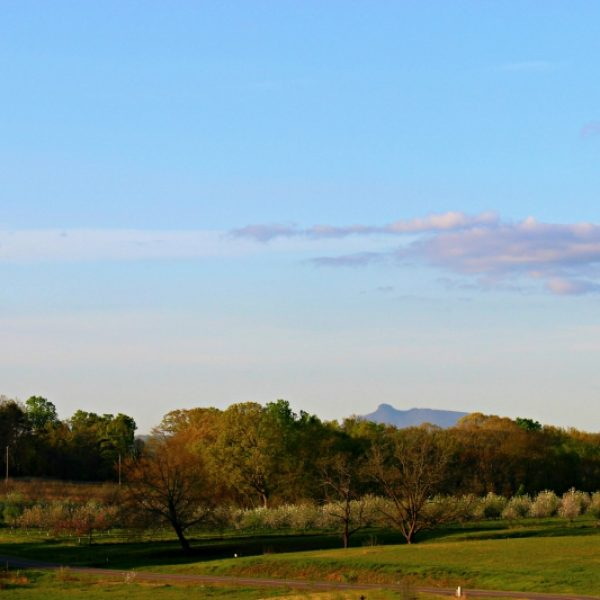 The farm and Pilot Mountain